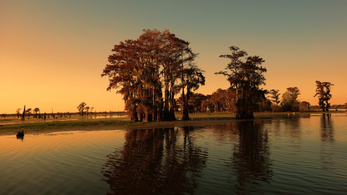 Louisiana bayou and cypress trees