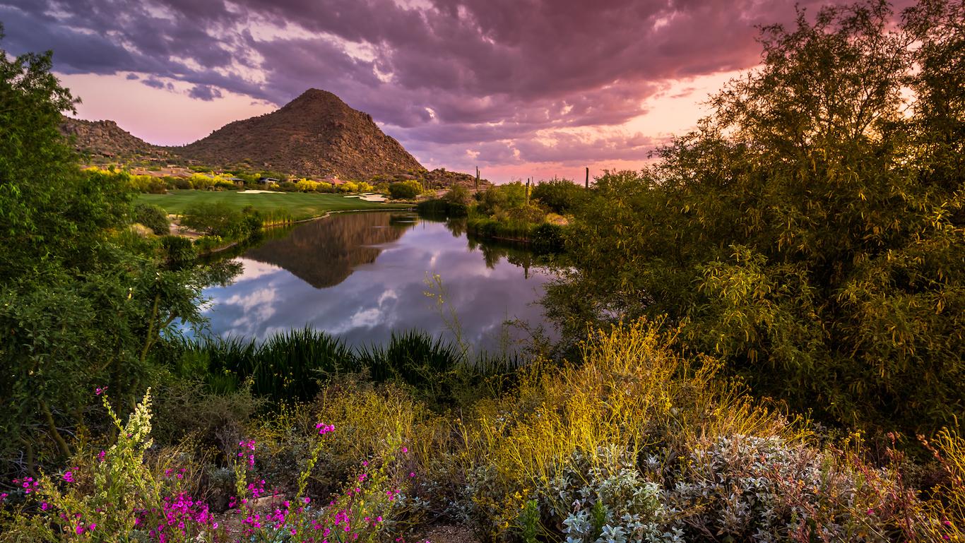 Sonoran Desert in Full Spring Bloom, Arizona