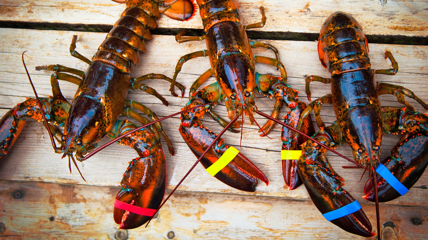 Three Lobsters Maine