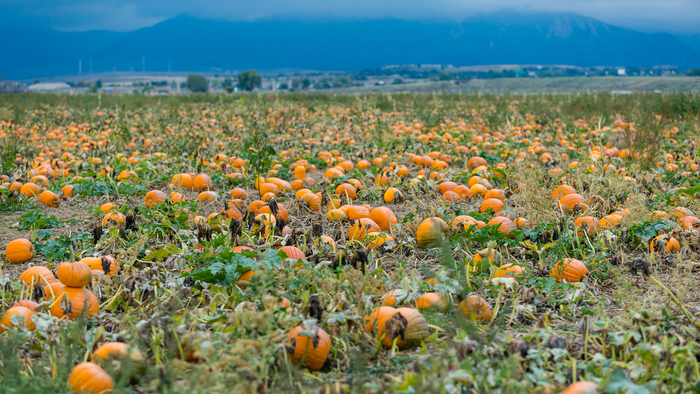 Pumpkin patch, Broomfield, Colorado