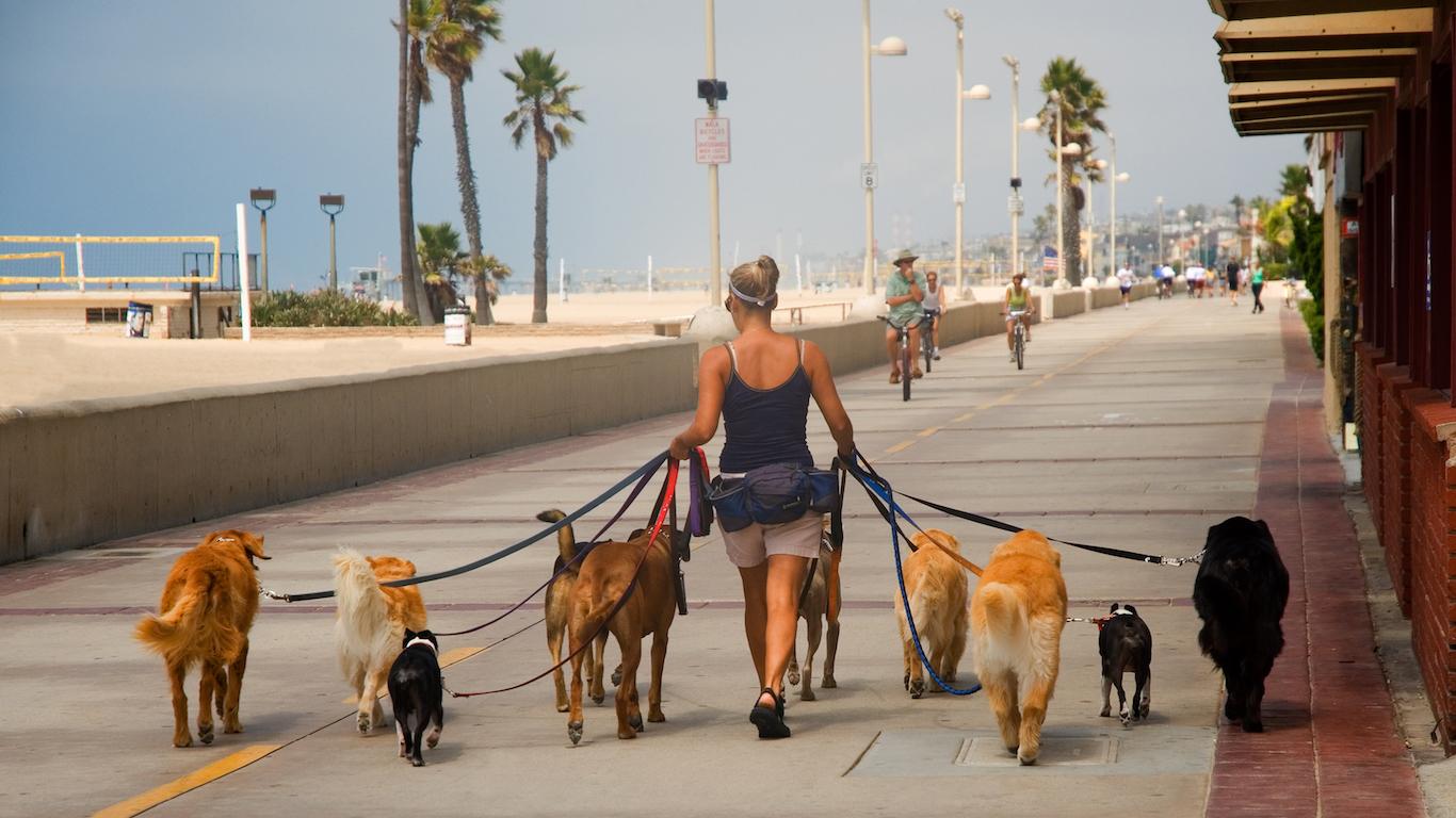 Dog walker, pet care