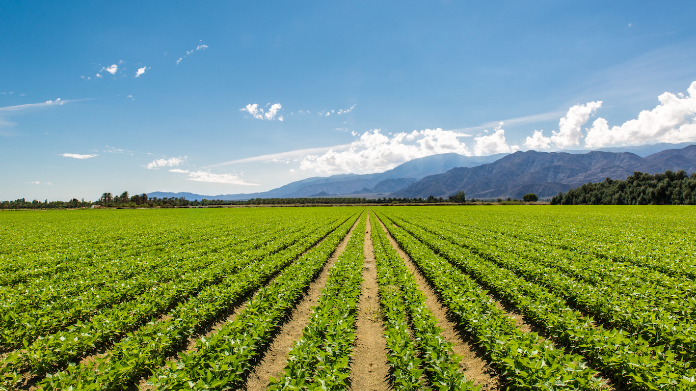 Fertile Agricultural Field of Organic Crops in Salinas, California