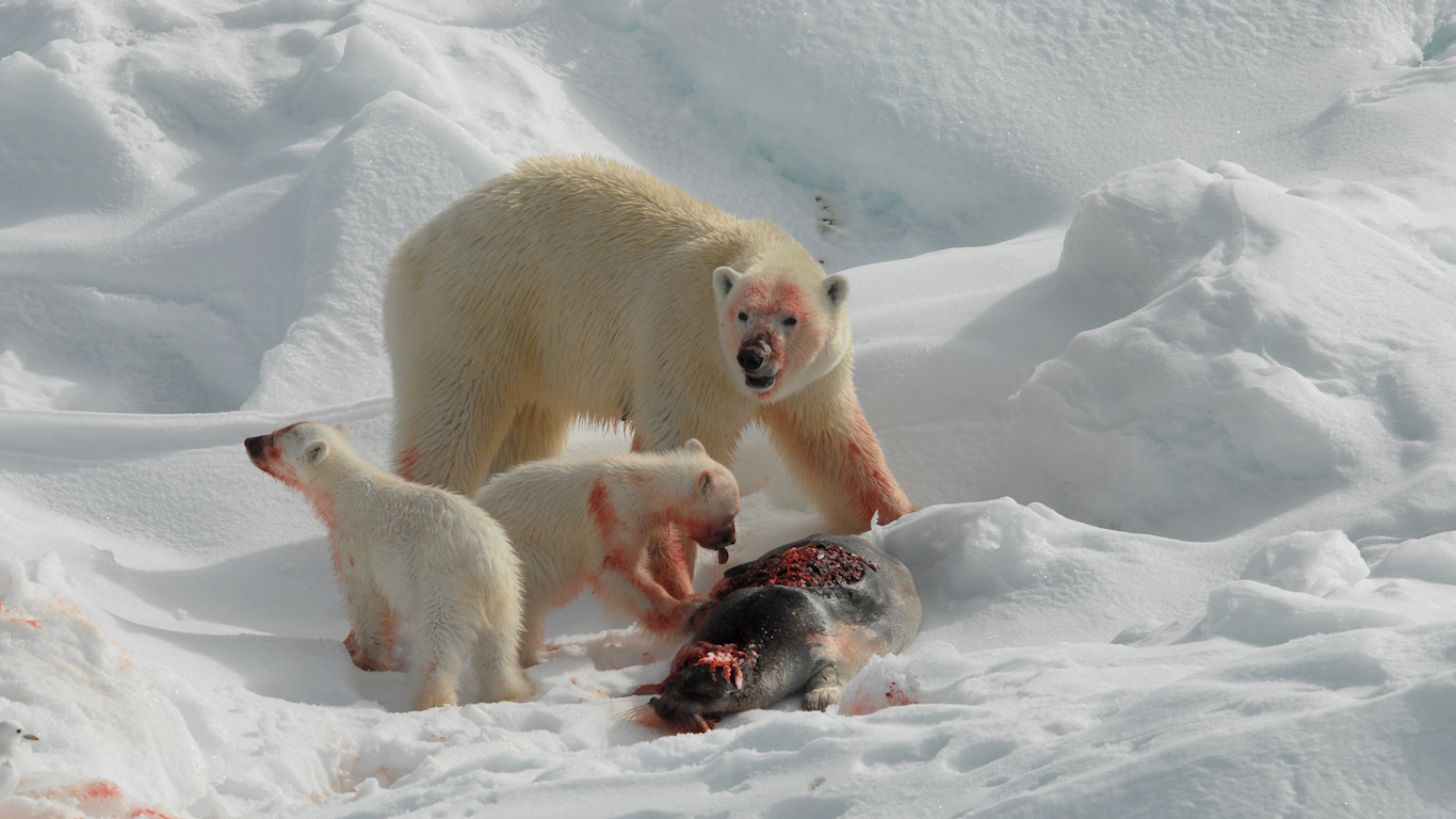 32 Surprising Facts About Polar Bears – 32/32 Wall St.