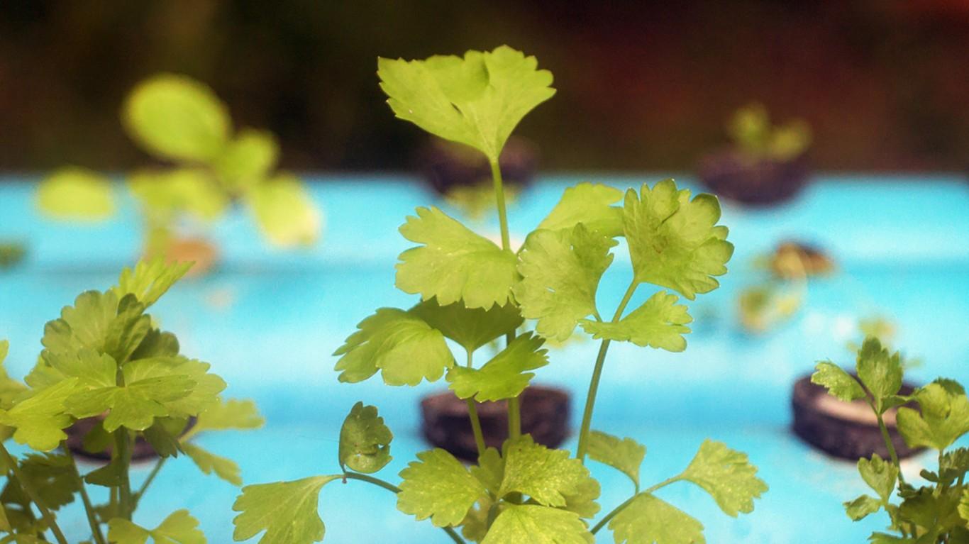 hydroponics by Alachua County