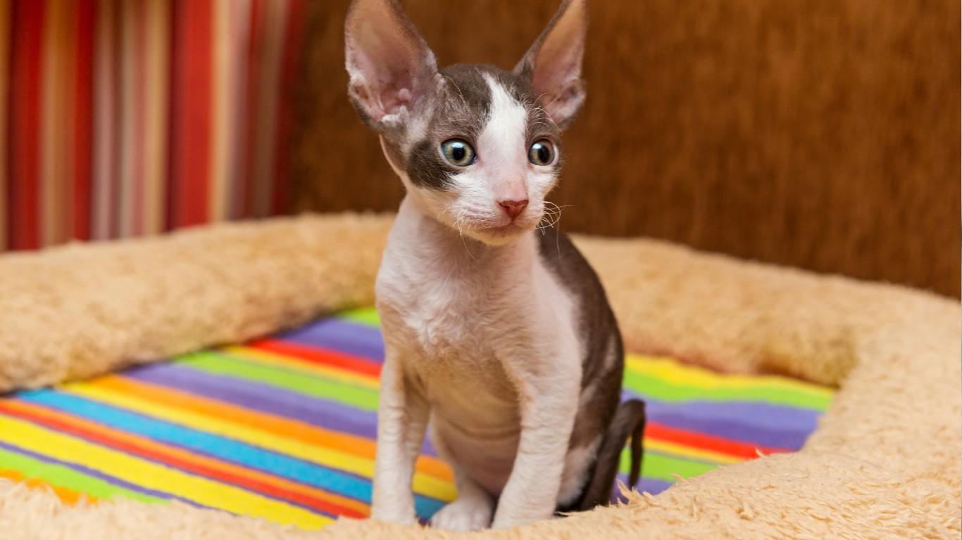 "Indoor//Outdoor SPHYNX Street Sign cat breed feline kitty kitten 18/"" Wide"