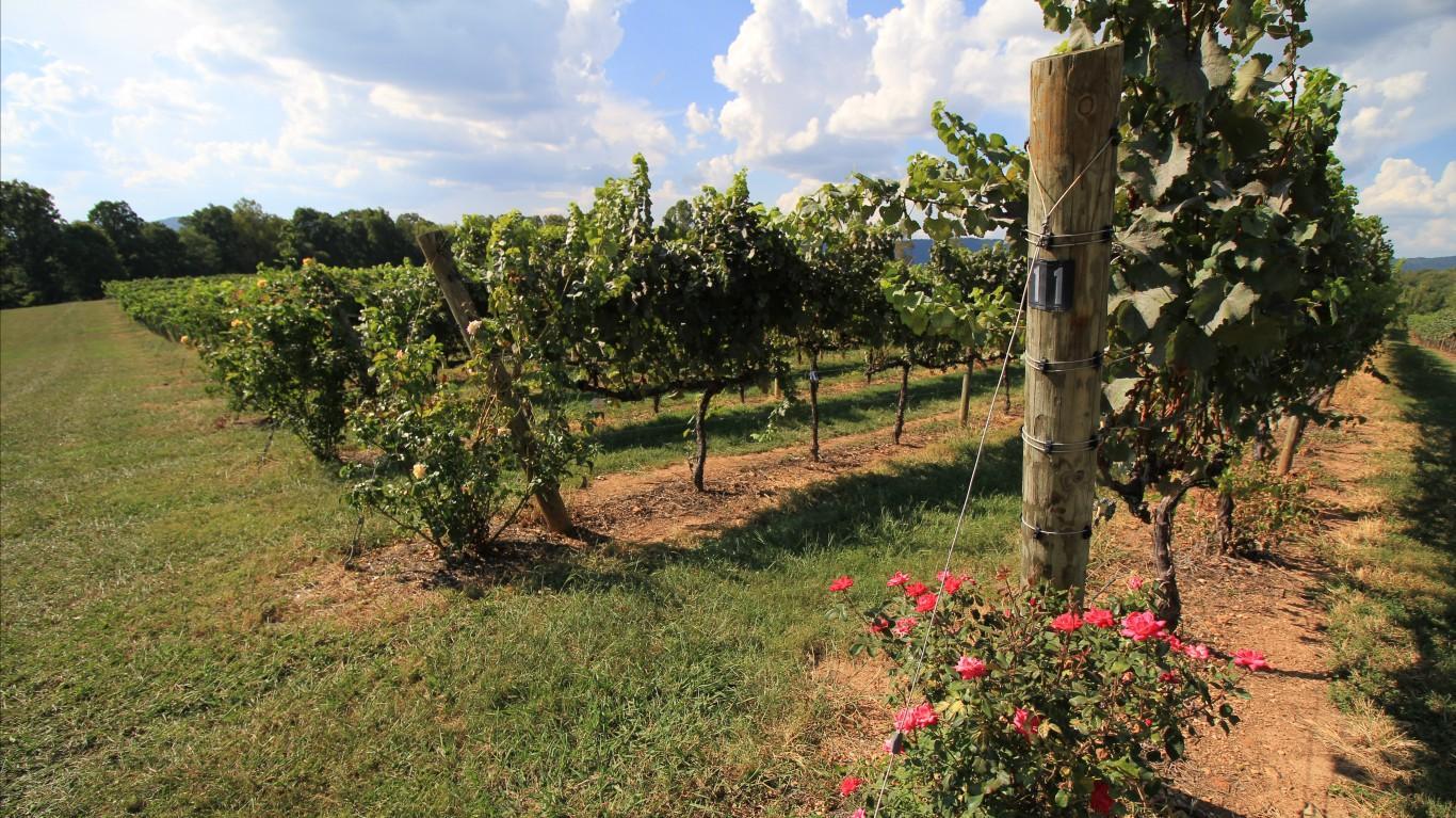 Vineyard by Jacob Resor