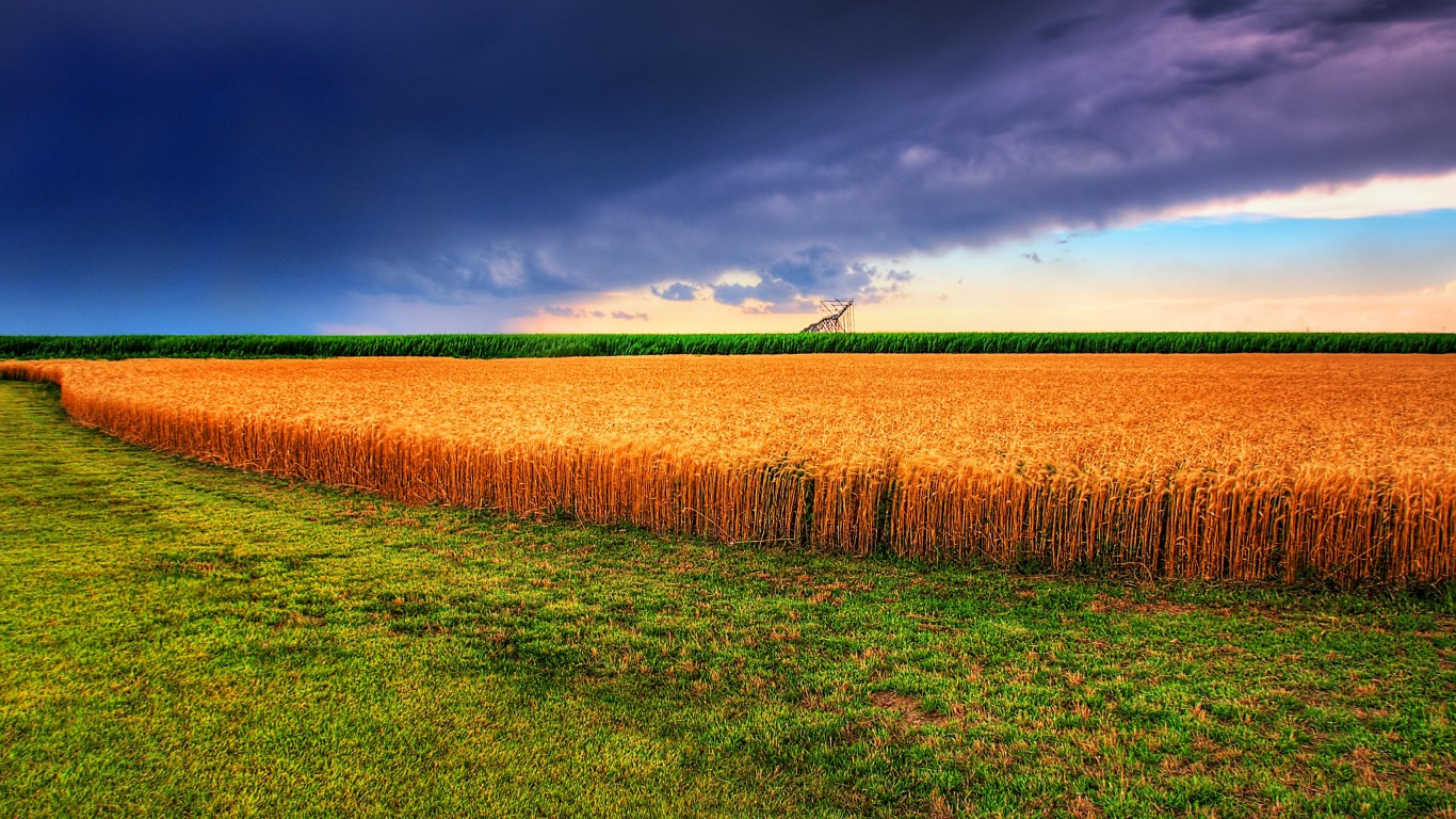 Kansas summer wheat field and ... by GPA Photo Archive