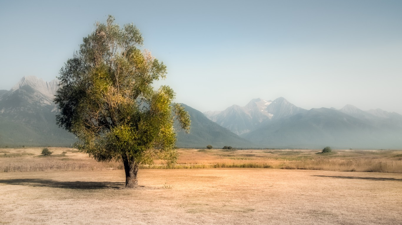 Tree in Flathead Reservation by Bernd Thaller