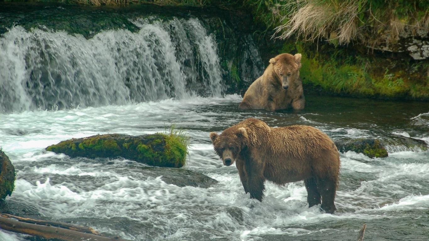 USA - Alaska - Katmai National... by Terry Ott