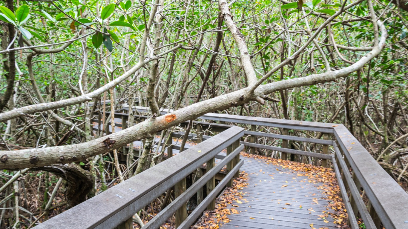 Everglades National Park, Flor... by dconvertini