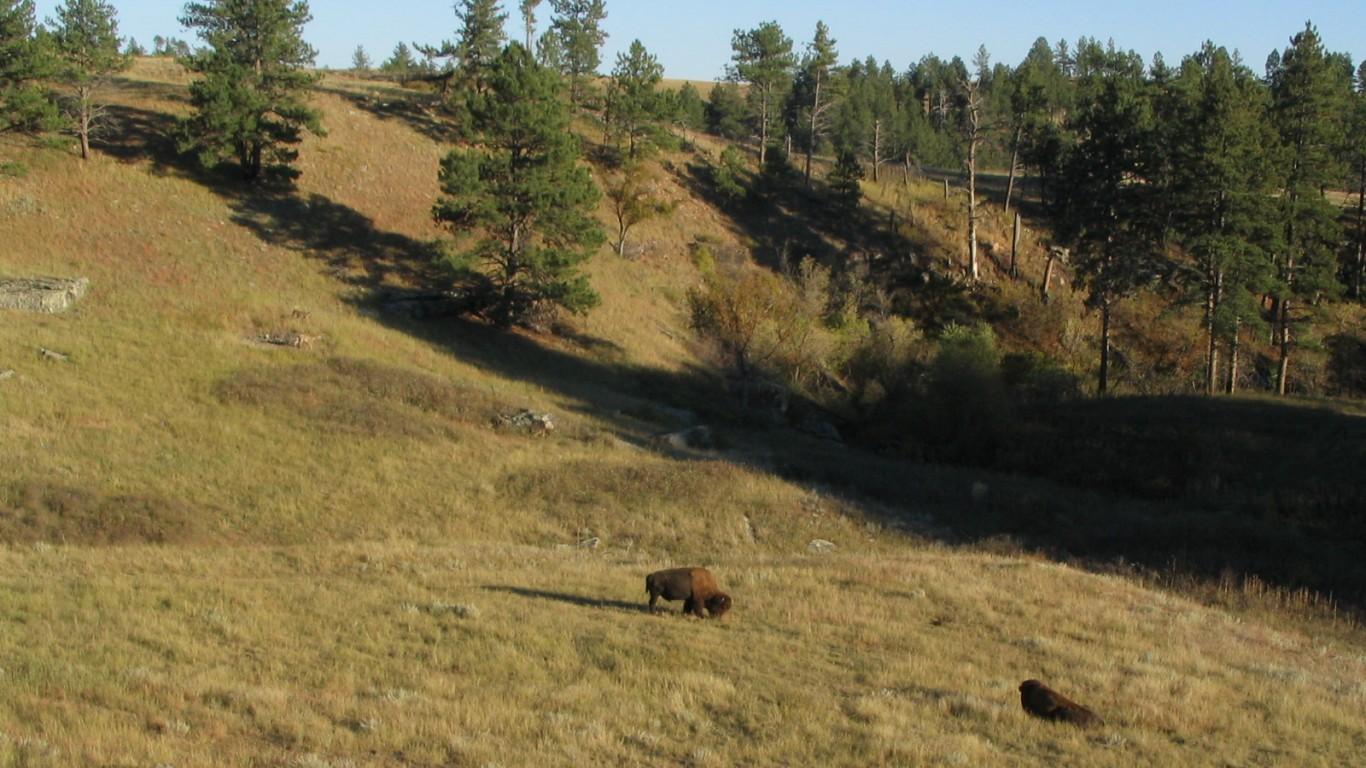 Bison and a Mule Deer, Wind Ca... by Ken Lund